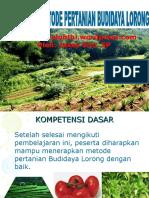 Budidaya Lorong