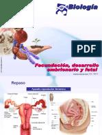 Clase 16 Fecundacion desarrollo embrionario y fetal.ppt
