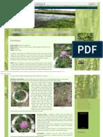 Faroleco_ Plantas Aromáticas3