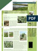 Faroleco_ Plantas Aromáticas