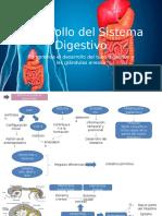 Desarrollo Del Sistema Digestivo