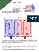 Funcionamiento de Las Delgas de Un Motor Electrico