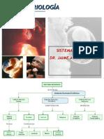 Embriologia - Sistema Nervioso