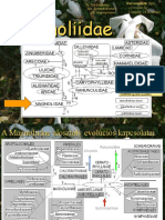 01Magnoliidae2015.ppt