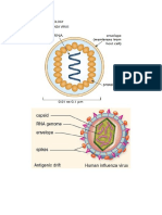 Diagrams for Igcse Biology