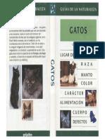 Animales - Gatos