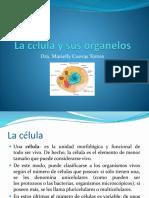 La célula14.pdf