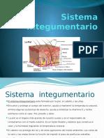 Sistema Integumentario.pptx