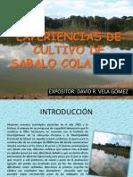 Documents.tips Experiencias de Cultivo de Sabalo Cola Roja (1)