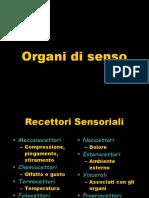 023 Organi Di Senso