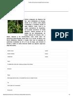 Cedrón _ El Huerto de UrbanoEl Huerto de Urbano.pdf
