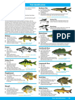 Ontario Fish Identification Guide