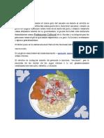 El  ceviche (2).docx