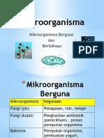 Mikroorganisma.pptx