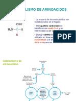 Catabolismo de Aminoacidos 1