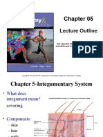 Chapter 5 Integumentary System