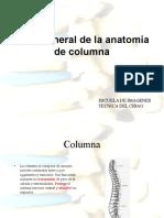 Anatomia Columna
