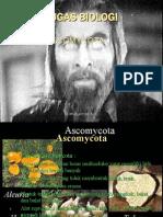 Ascomycota Presentation