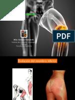 Musculos Miembro Inferior muscle Prof Tiznado