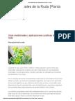 Usos Medicinales de La Ruda [Planta Curativa]