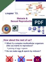meiosis2