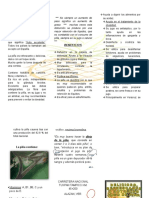 Z.Z.Z FOLLETO  PIÑA.doc