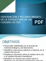 PRÁCTICA DE LABORATORIO - PSICOLOGÍA