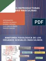 Funciones Reproductoras y Hormonas Masculinas