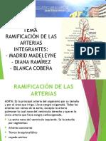 Arterias 1
