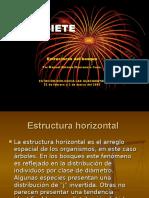 Estructura Horizontal Del Bosque