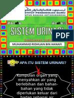 53514697 Sistem Urinari Manusia
