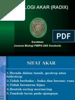 Morfologi Akar (Radix).ppt