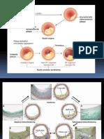 dr.iswanto sympo-3.pdf