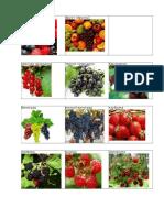 Objetos traduzidos da língua Russa Ягоды-фрукты