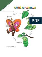 Ciclu de Viata Al Fluturelui