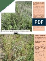 Plantas y otras del Peñ`+on