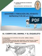 APARATO REPRODUCTOR DE LA VACA  1.pptx
