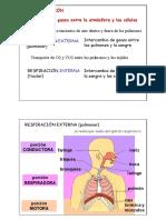 Respirator i o; Apuntes de