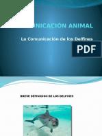 La comunicacion de los Delfines