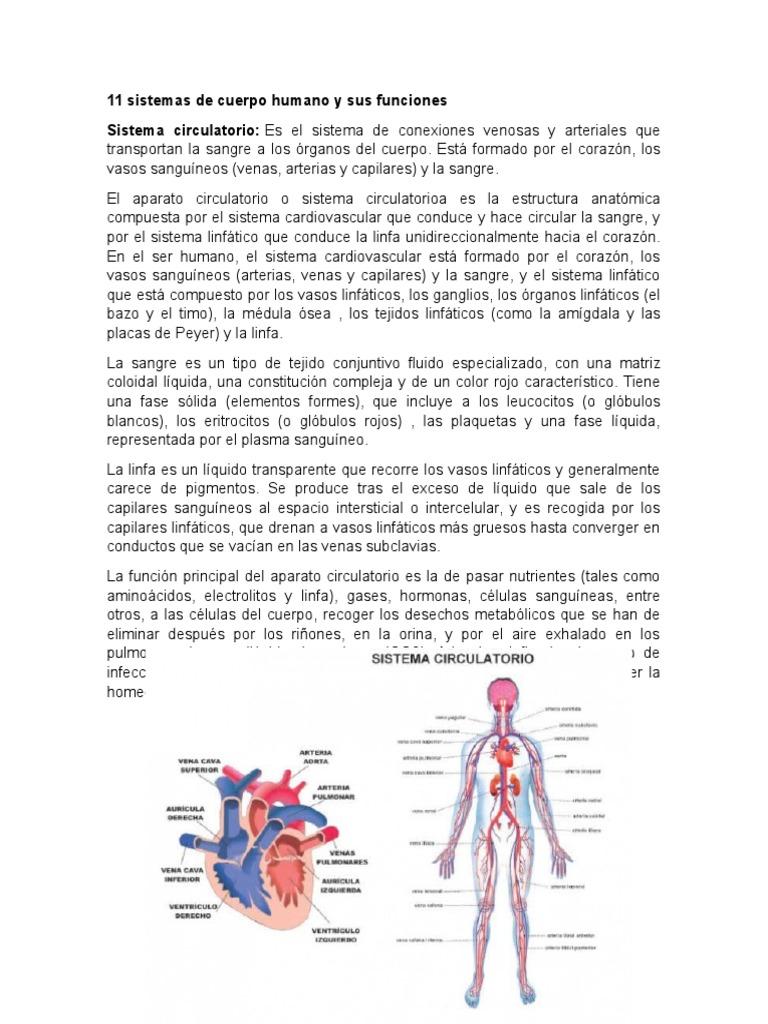 Lujo Los órganos Del Cuerpo Fotos De Ubicación Colección de Imágenes ...