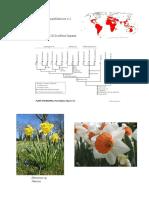 10 Amaryllidaceae Apg