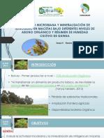 Actividad Microbiana Quinua- FAVIO ZUAZO
