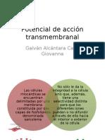 Potencial de Acción Transmembranal