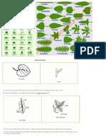 Tipos de Hojas Silvicultura 2014