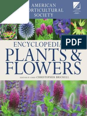Fairy Garden Flower ABUTILON X SUNTENSE 25 seeds VITIFOLIUM