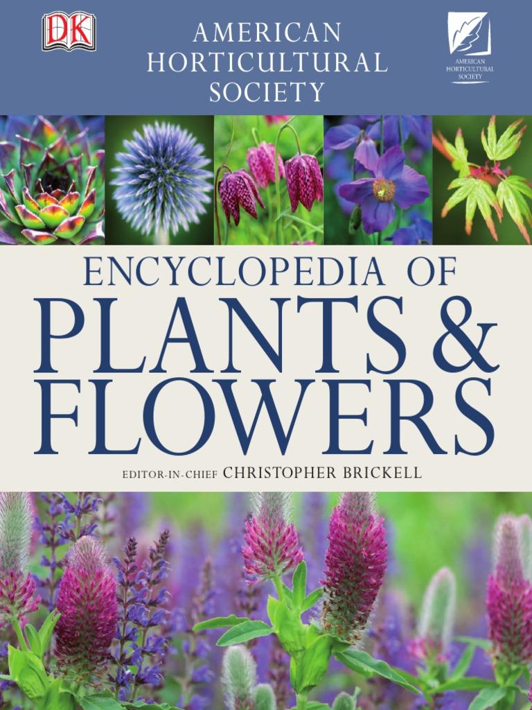 Fuchsia magellanica Versicolor Hardy Fuchsia syn. Tri-colour