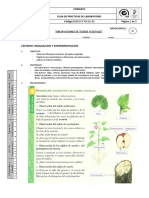 Praxis 3 Observaciones Tejidos Vegetalesx