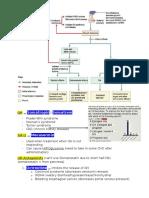 1. Hypothalamus & Pituitary