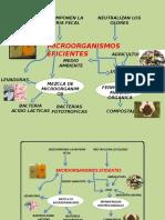 MICROORGAISMOS EFICIENTES