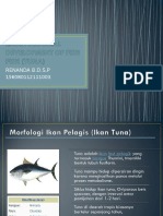 Embryological Development of Fish